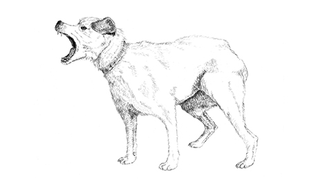 Drawing of angry dog