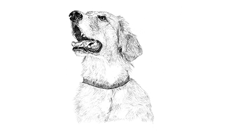 Drawing of focused dog