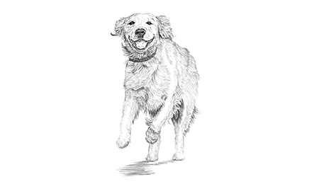 Drawing of happy dog