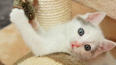 kitten playing on exercise tree