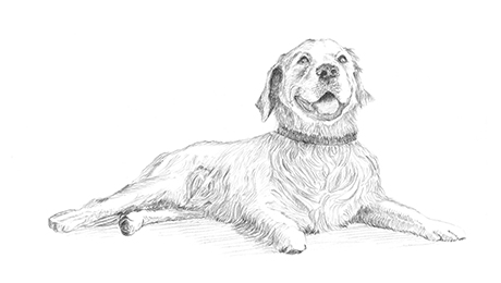 Drawing of neutral dog