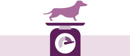 Help reduce the risk of pet obesity through collaborative prevention programmes